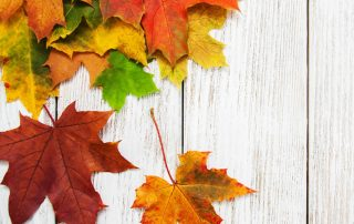 Fall News: Online Programs and Re-Opening Office!